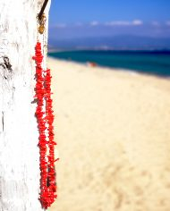 Red-Corals-1