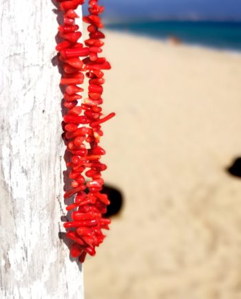 Red Corals